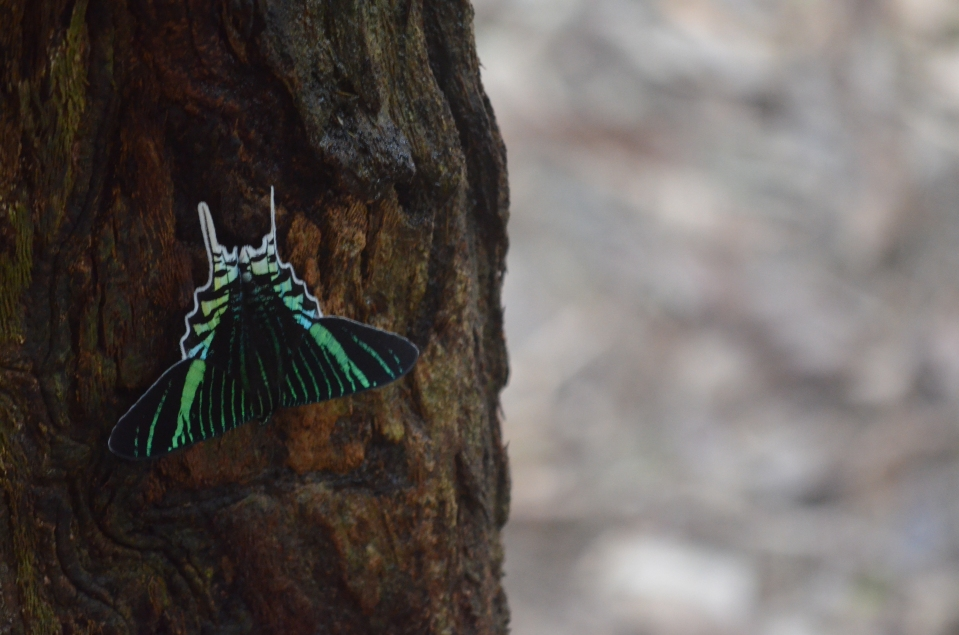 This beautiful butterfly was on a tree right outside our door.